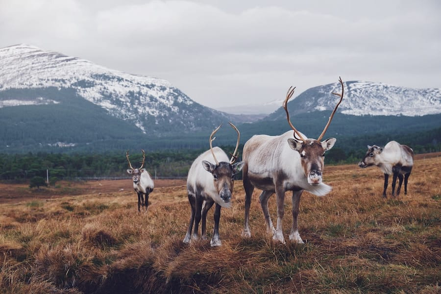 Ethical Sami Tours and TromsøReindeer Farms You Can Visit