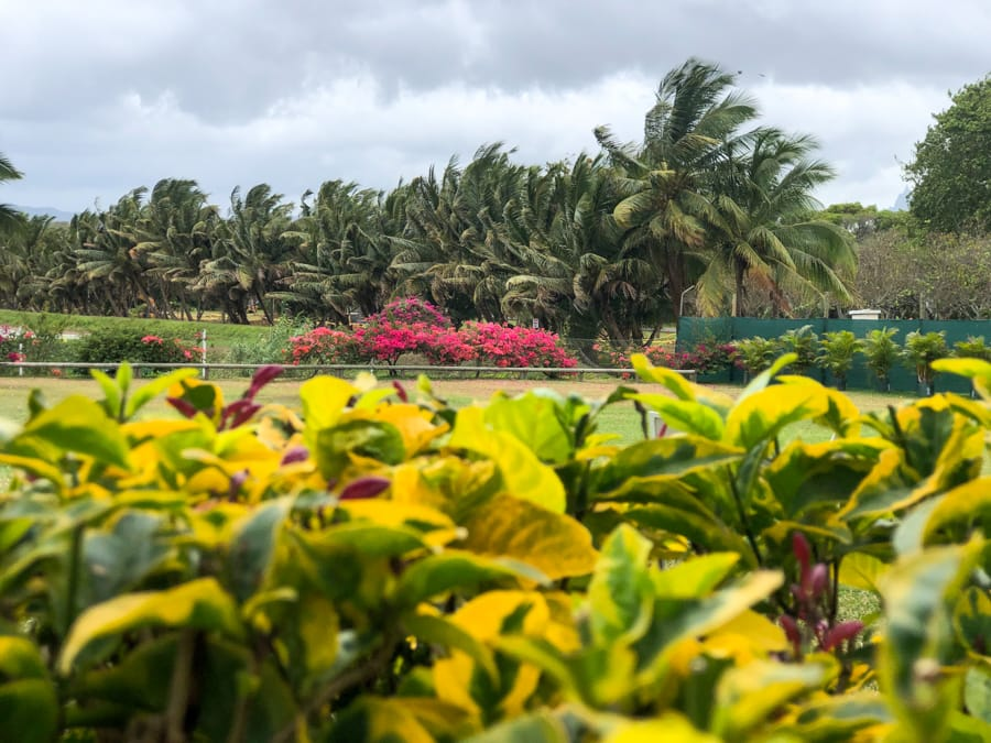 Why You Should Visit L'Aventure du Sucre in Mauritius (and What to Expect!)