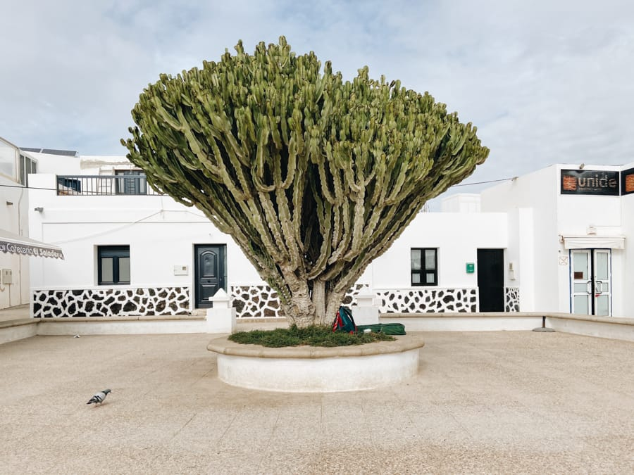 Things to Do in La Graciosa, the Newest and Wildest Canary Island