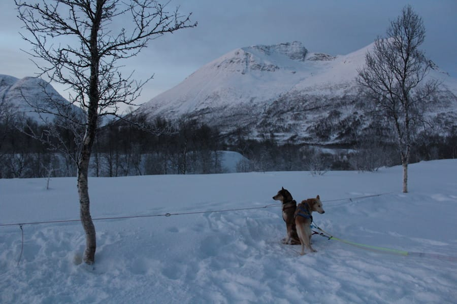 30 Useful Things to Know Before You Visit Tromsø, Norway : winter daylight in Tromso in December while dog-sledding