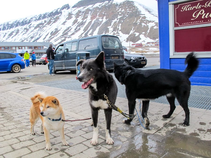 What to know before visiting Svalbard (tips for Spitsbergen and beyond)