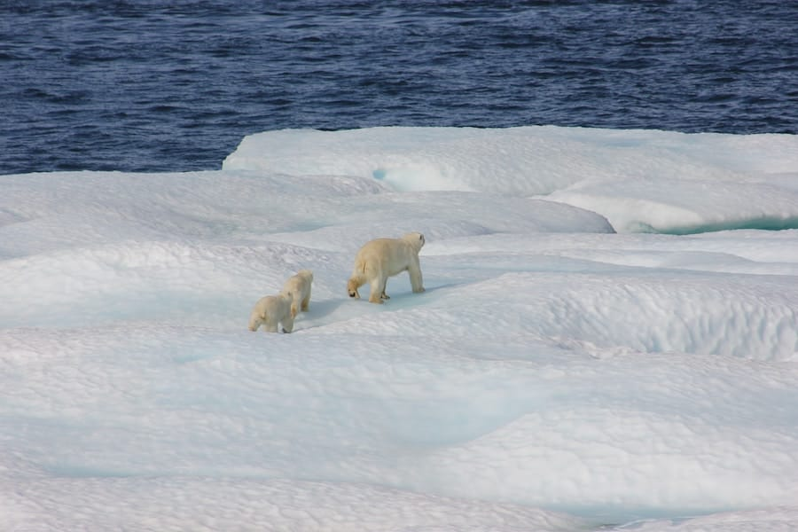 Plan your trip to Svalbard- home of the polar bears!