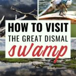 Places to visit in Virginia: Great Dismal Swamp