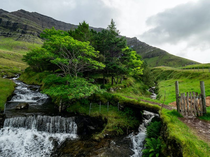 Kunoy, Faroe Islands: Home of the Famous Faroese Forest