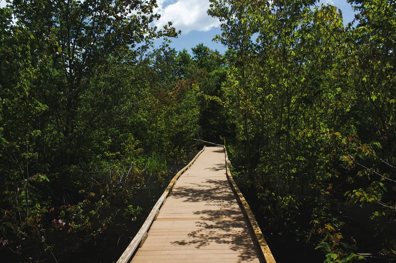 Virginia tourism: Great Dismal Swamp and Lake Drummond
