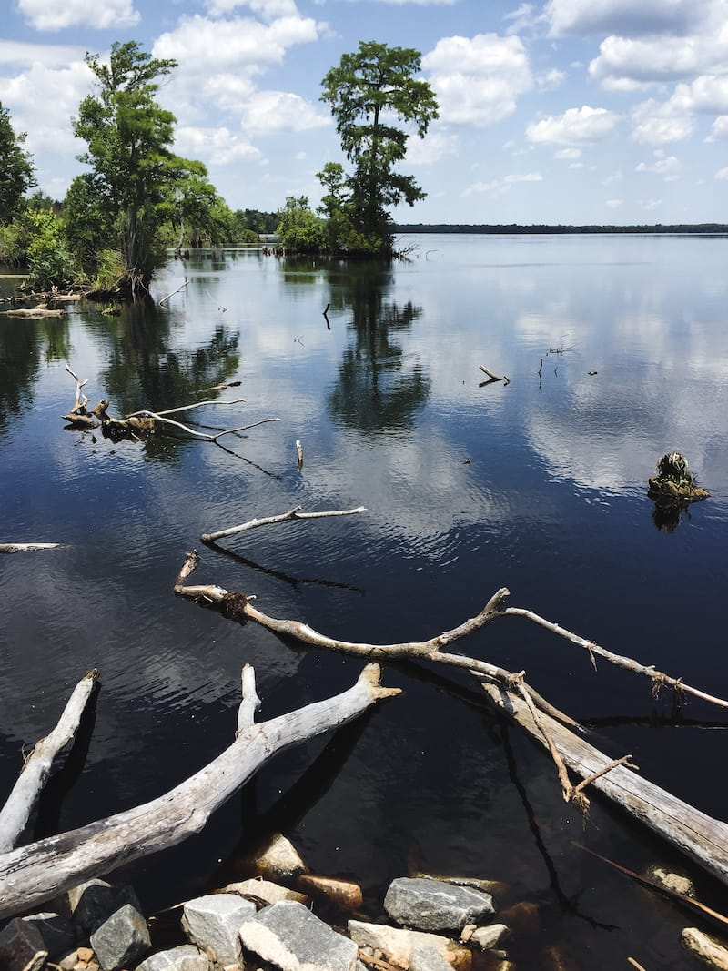 Visiting the Great Dismal Swamp: What to know before you go