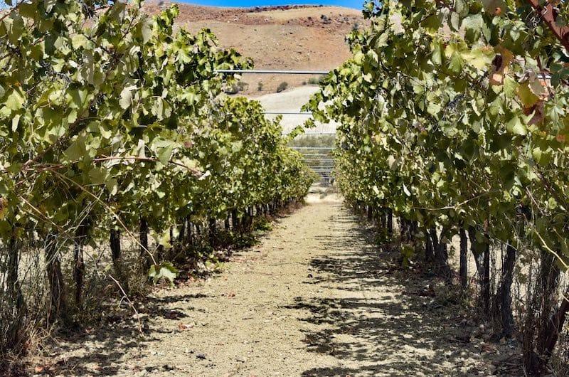Crete wine region: Must visit place in Crete