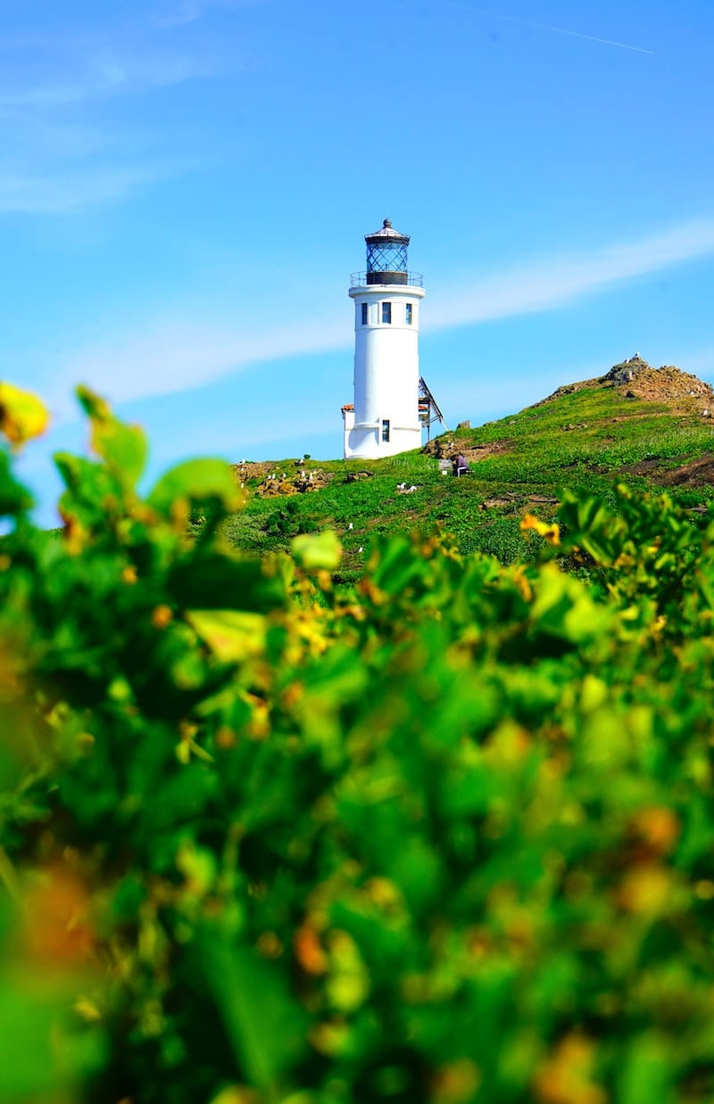 How to Visit Channel Islands National Park (+ Things to Do): Anacapa Islands