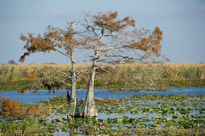 Everglades National Park in Florida in winter