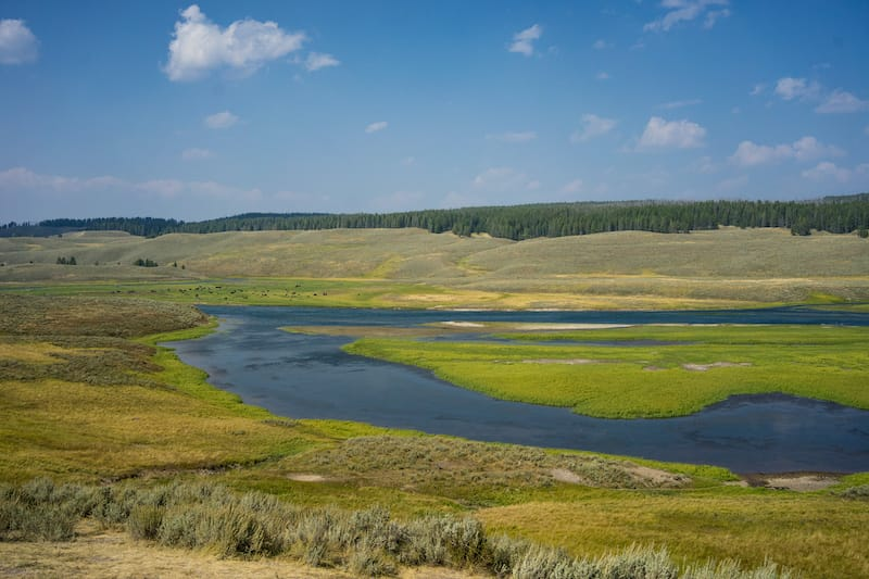 Hayden Valley 2 days in Yellowstone itinerary