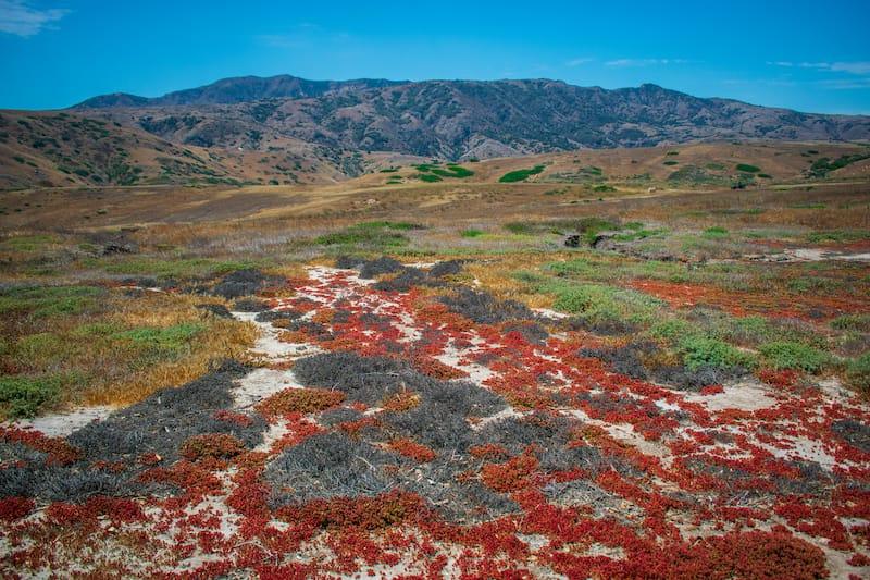 Santa Cruz Island Channel Islands California
