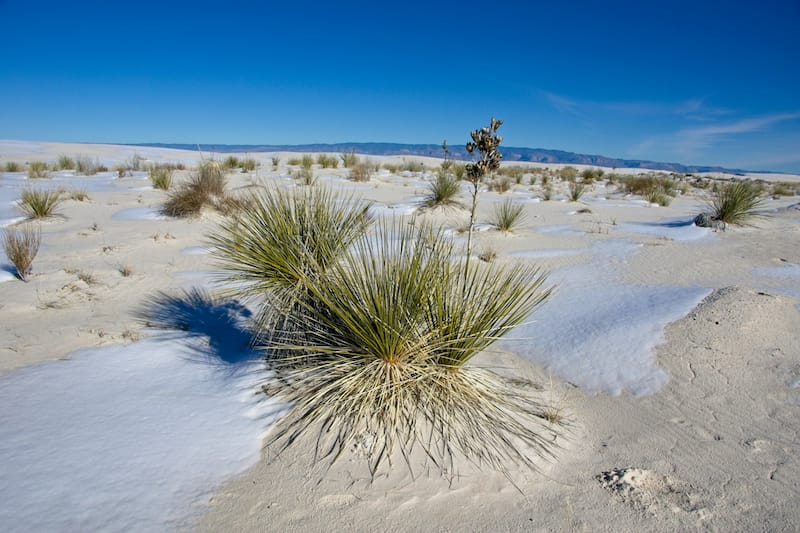 White Sands National Park in winter