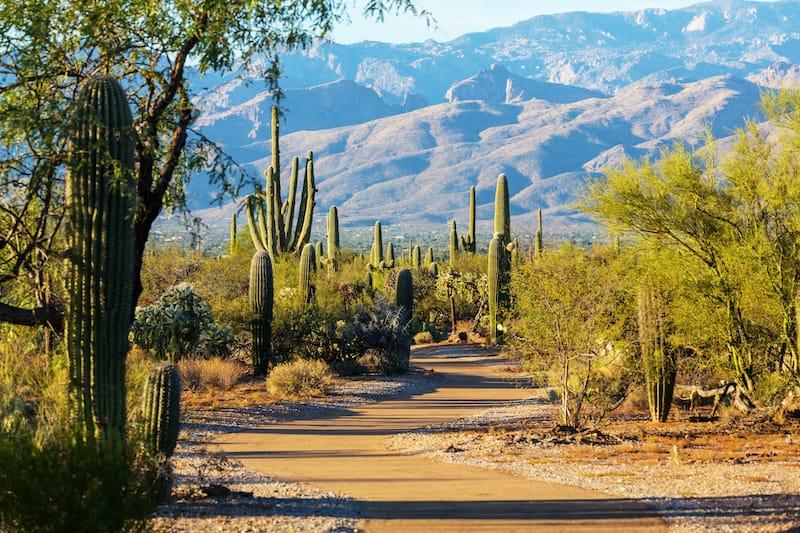 Beautiful Saguaro NP in Arizona