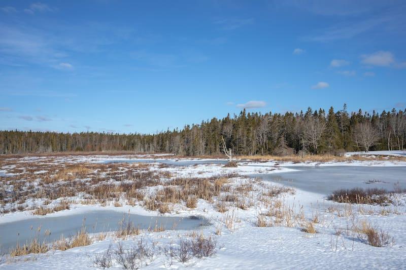 Beaver lodge in frozen Seawall Pond
