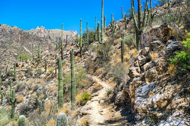 Saguaro National Park trails