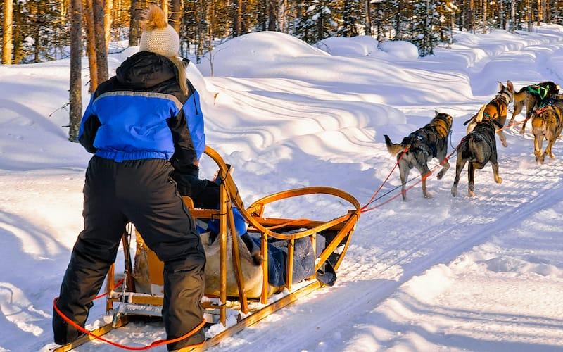 Dog sledding in Rovaniemi Finland Lapland