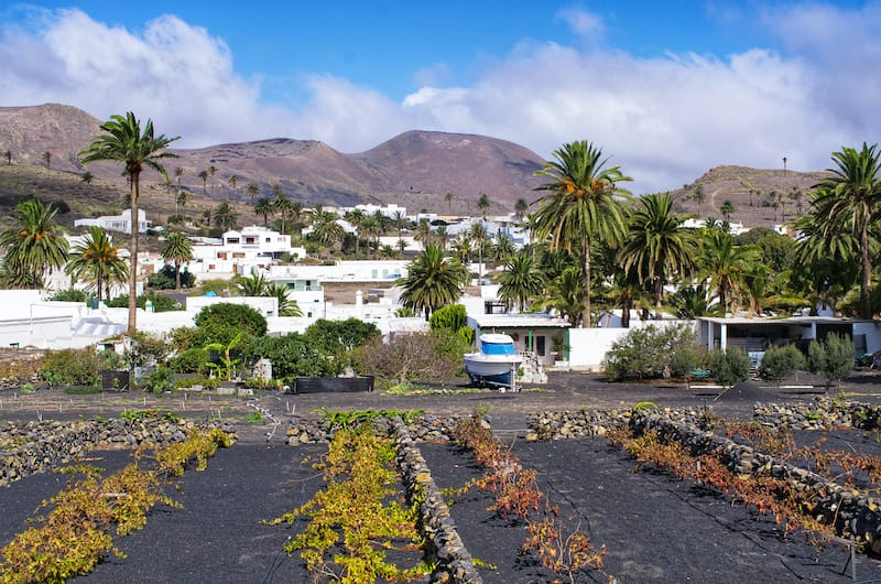 Haria on Lanzarote palm trees
