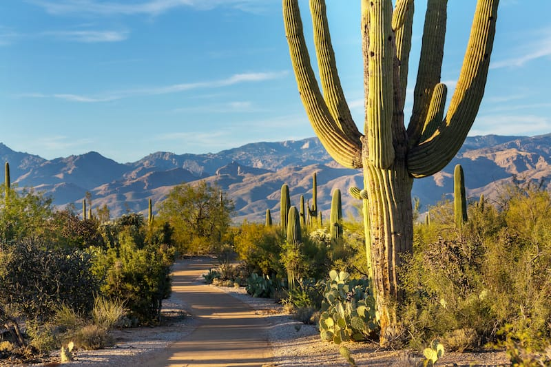 Hikes in Saguaro National Park