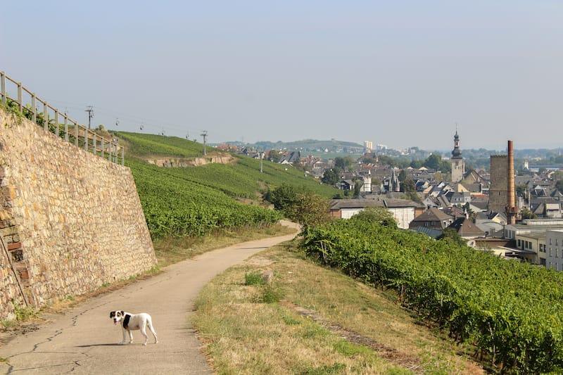 Rudesheim Things to do travel guide-10