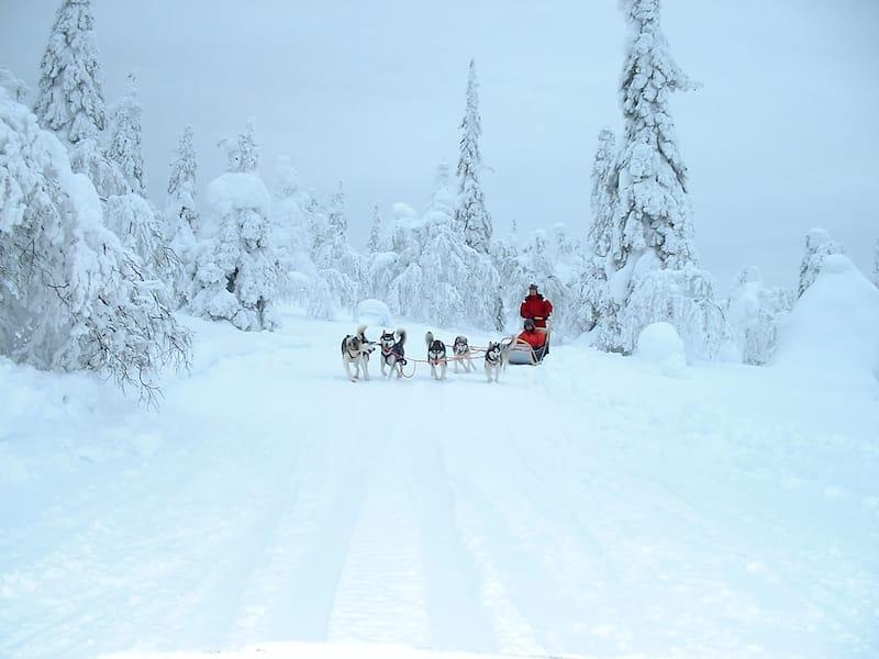 Salla Finland dog sledding
