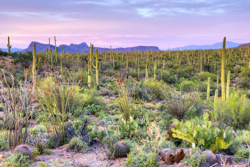 Best hikes in Saguaro National Park