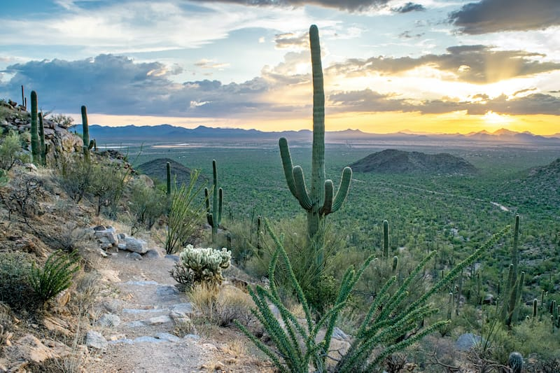 Trails in Saguaro National Park in Arizona