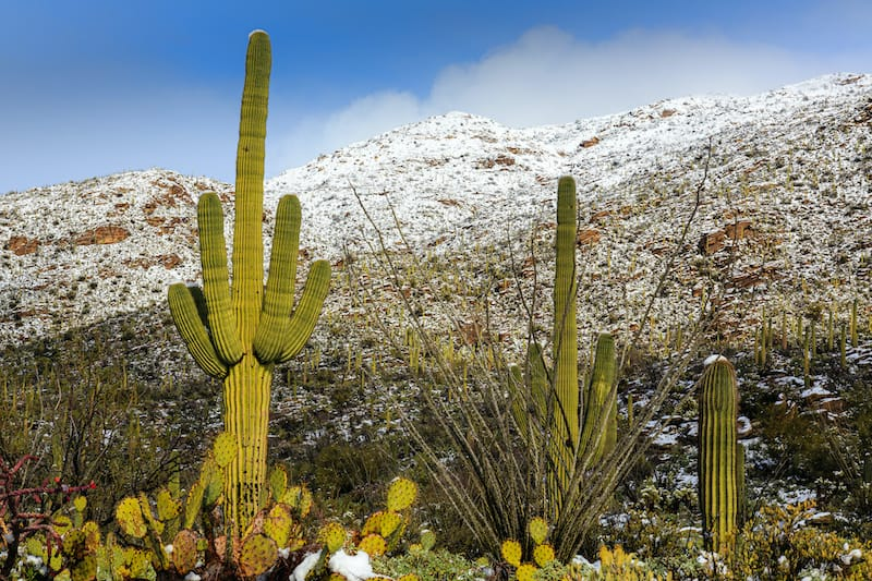 Winter in Saguaro National Park in Tucson
