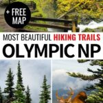 Are you an active traveler and looking for the best hikes in Olympic National Park for your upcoming trip? This Olympic National Park trails post has you covered! | Olympic National Park hiking | Olympic National Park hikes | Hoh Rainforest hikes | Hoh Rainforest trails | Washington hiking | US National Parks | Washington National Parks | PNW hiking | PNW trails | Olympic National Park nature | Olympic National Park photography | PNW waterfalls | Olympic National Park itinerary