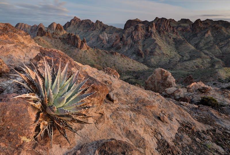 Cactus on the rocks in the Kofa National Wildlife Refuge in Arizona ay sunrise