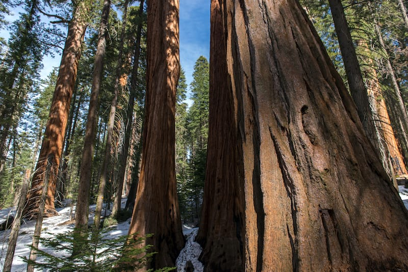 Sequoia National Park California : Best national parks to visit in March
