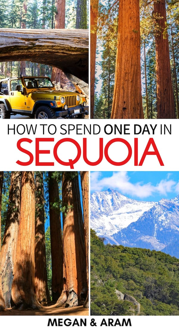 Curious about how to spend one day in Sequoia National Park? This guide gives you tips for things to do and how to plan your Sequoia National Park itinerary. | Sequoia National Park hikes | Sequoia National Park camping | Sequoia National Park winter | Sequoia National Park one day itinerary | sequoia and kings canyon