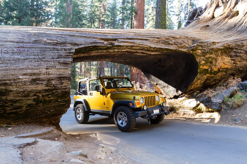 Gold jeep going thru a tunnel cut out of a single Sequoia tree trunk sequoia np
