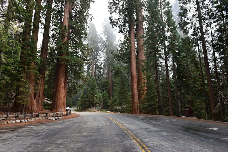Road in Sequoia National Park - one day in Sequoia National Park itinerary for first-timers