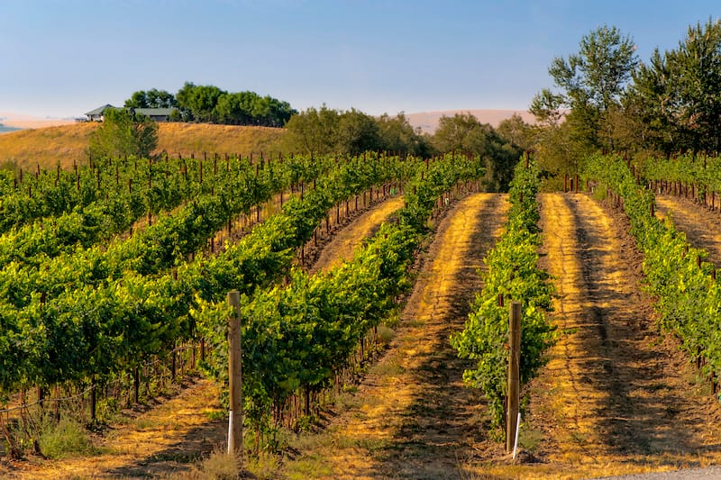 Best wineries in Walla Walla