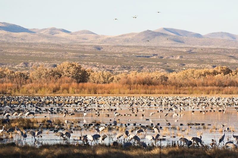 Bosque del Apache Wildlife Preserve