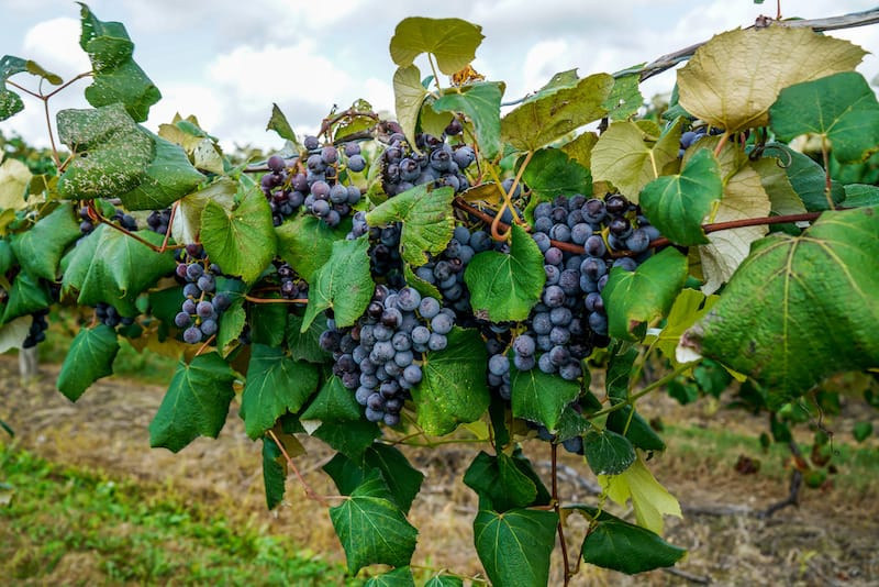 Best Ohio wineries to visit this year