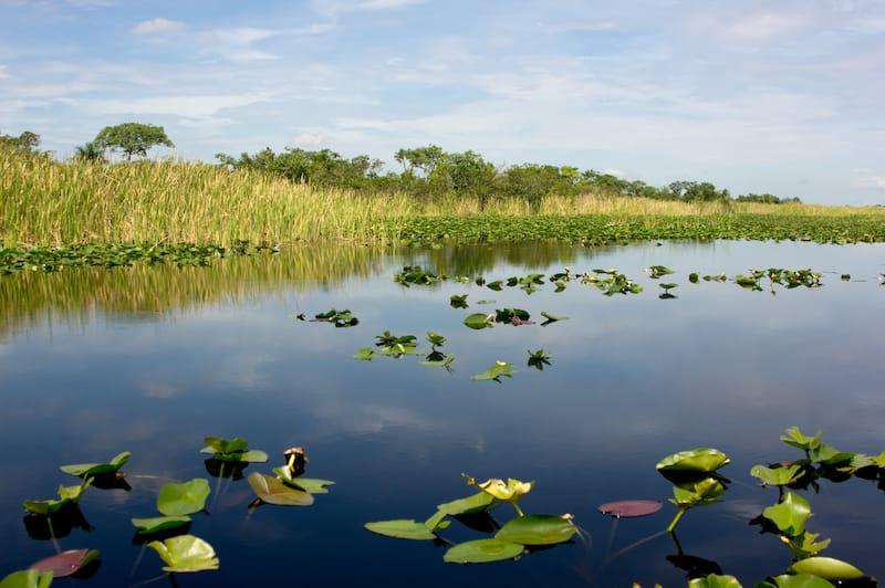 Everglades National Park April