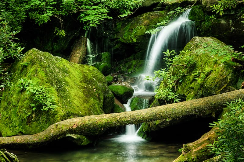 Great Smoky Mountains National Park spring