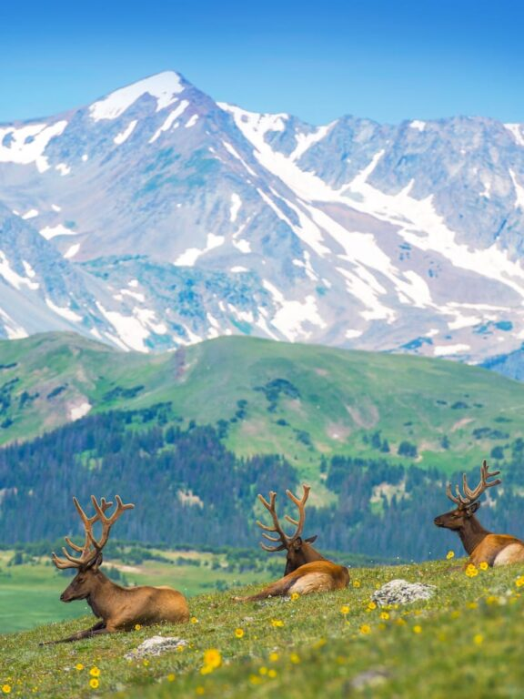 Rocky Mountains facts story