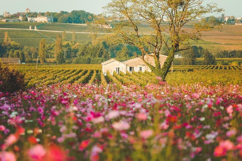 Saint-Émilion - Places to visit in South France 1