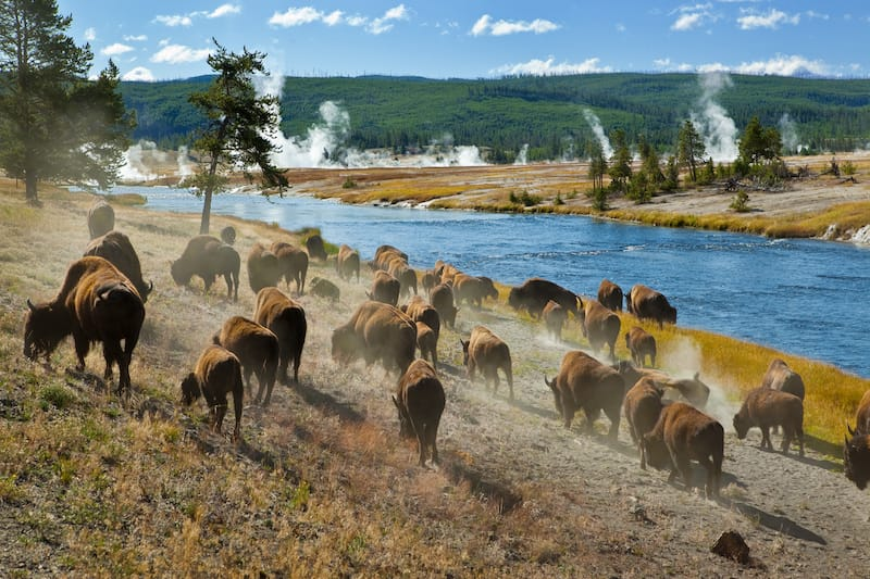 Best Airbnbs in Yellowstone National Park