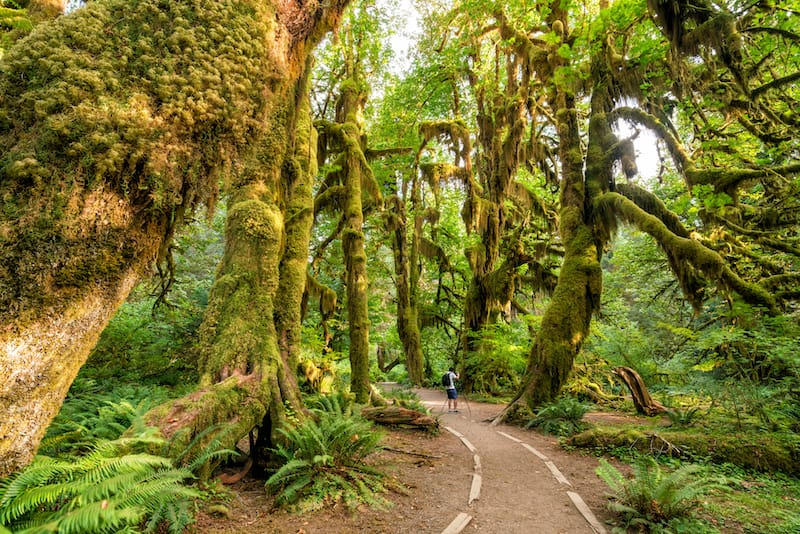 Olympic National Park in May - Best national parks to visit in May