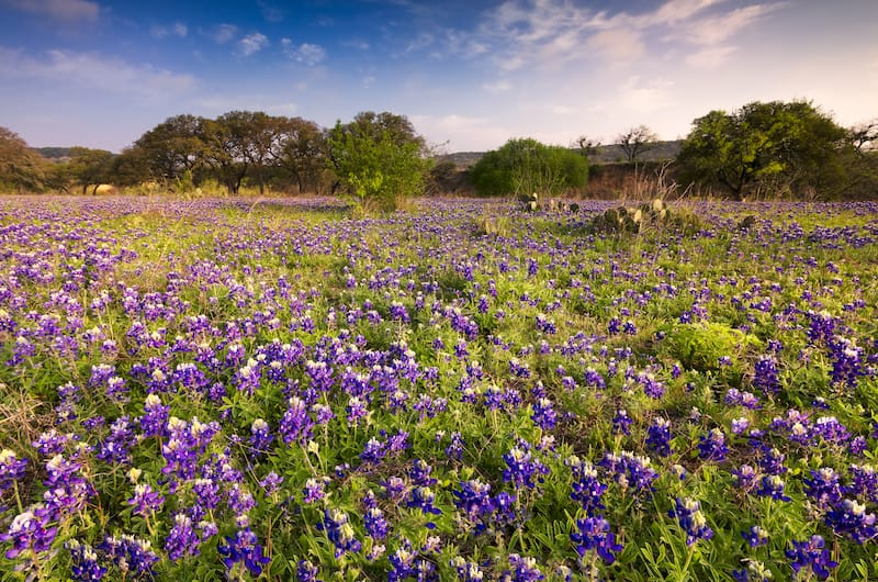 Texas Hill Country in May