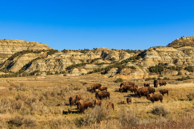 Theodore Roosevelt National Park in May