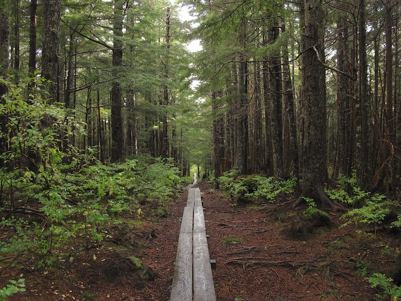 Gaven Hill Trail in Sitka