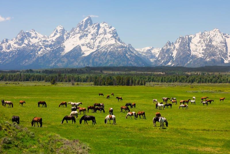 Grand Teton National Park in June