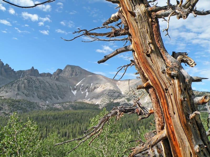Great Basin National Park in June