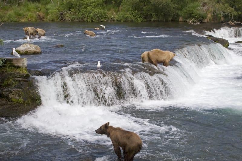 Katmai National Park in June