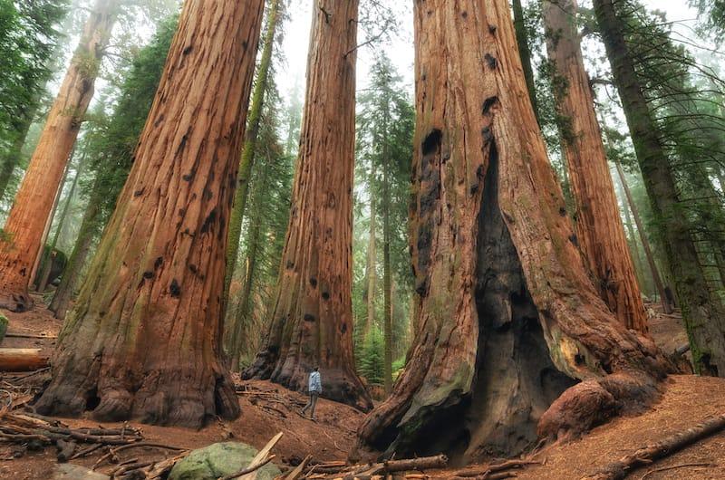 Sequoia National Park in June