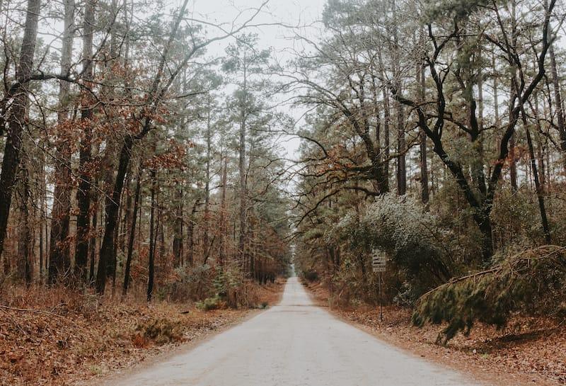 Davy Crockett National Forest